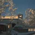 vuk_vom_fmw_winter_am_morgen